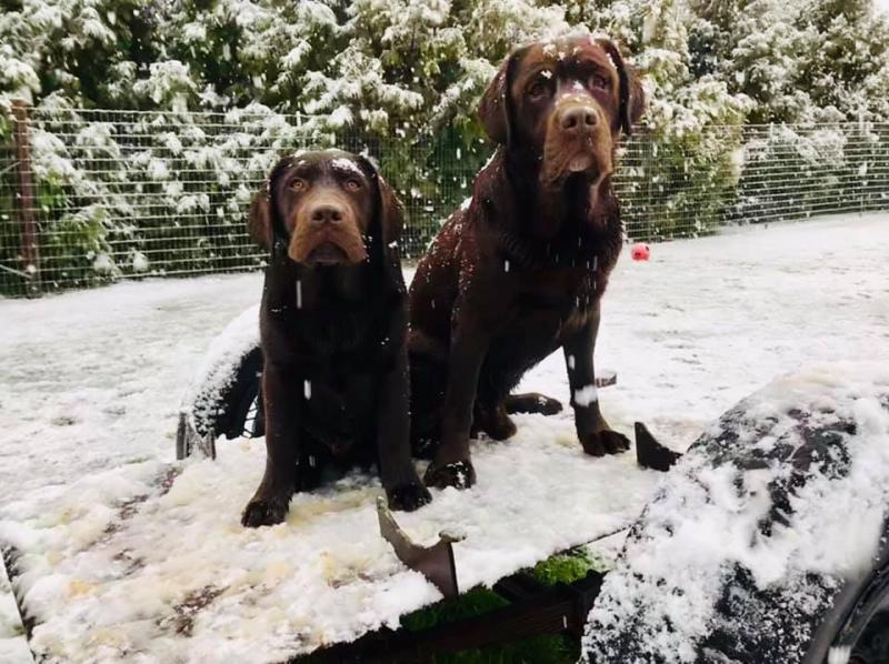 Ham and Ten in the snow